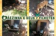 GAPA pede doações para cachorros abandonados no bairro Várzea