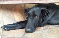 Domingo tem feira de adoção de cães na orla da Lagoa Central