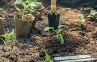 Prefeitura de Pedro Leopoldo vai distribuir mudas de árvores no Dia Mundial do Meio Ambiente