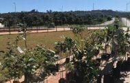 Prefeitura de Lagoa Santa distribui mudas de árvores no Dia Mundial do Meio Ambiente