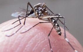 Lagoa Santa registra novos 181 casos prováveis de dengue em uma semana