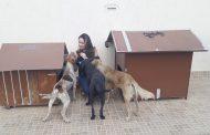 Cães comunitários: uma forma de dignidade aos animais abandonados em Lagoa Santa