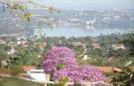 Ipês florescem e dão colorido especial as ruas de Lagoa Santa
