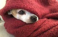Sim, os animais também sentem frio