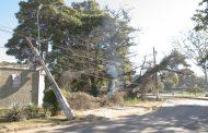 Árvore de grande porte cai e derruba poste na Orla da Lagoa