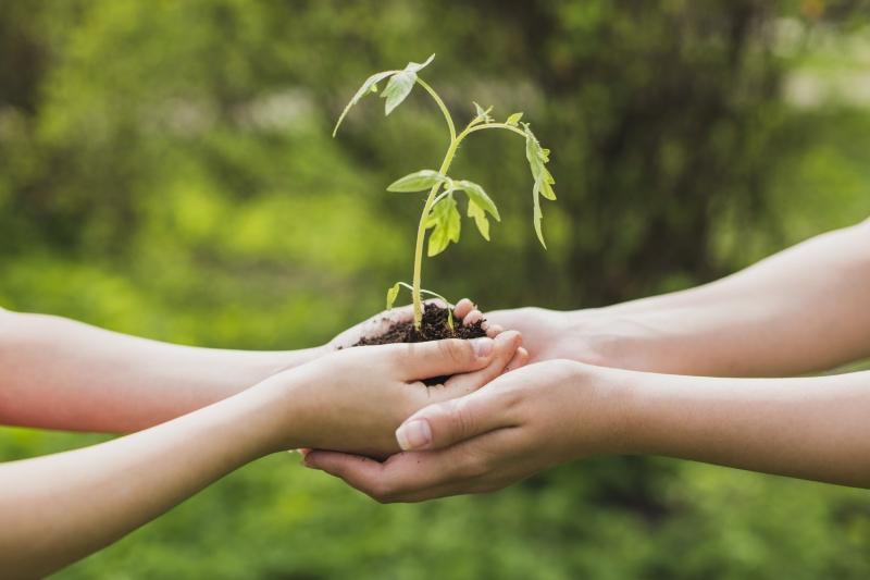 Abril Solidário: Instituto Florescer realiza campanha para arrecadar alimentos