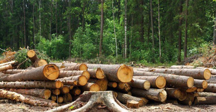 Denúncia – Corte ilegal de árvores da mata do Recanto do Poeta em Lagoa Santa