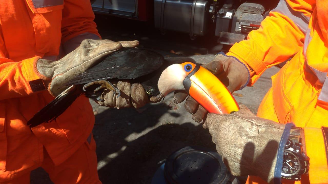 Bombeiros libertam tucano preso em árvore por linha de pipa