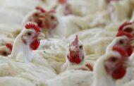 China confirma primeiro caso de Gripe Aviária  H1N03 em humanos