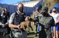 Força Aérea Brasileira com base em Lagoa Santa recebeu a doação de um filhote do GOC