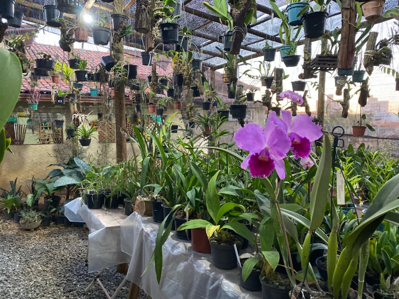Dia do Orquidófilo: Conheça o professor de Lagoa Santa que é apaixonado por orquídeas