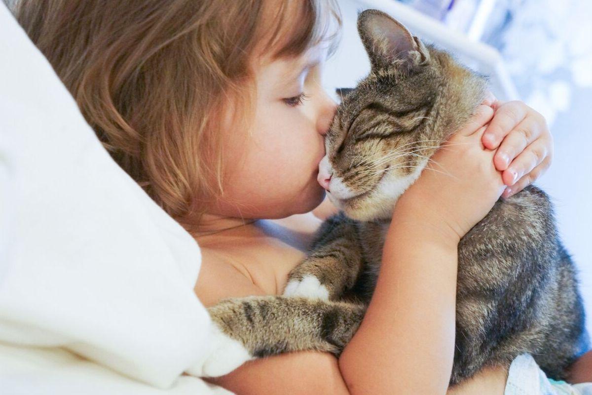 Direito e Proteção Animal podem ser incluídos nos currículos das escolas municipais de Lagoa Santa
