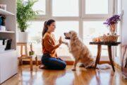 Como escolher a raça de cão que mais combina com você?