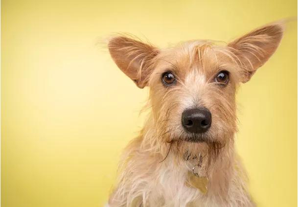 """Hoje é dia do Cão sem Raça definida o famoso Vira-lata. Saiba onde arrumar um """"doguinho"""" em Lagoa Santa"""