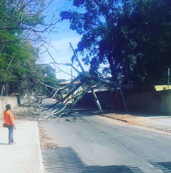 Árvore cai e interdita rua em Lagoa Santa